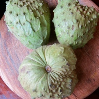 A word about cherimoyas