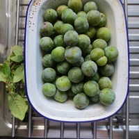 Small green plums